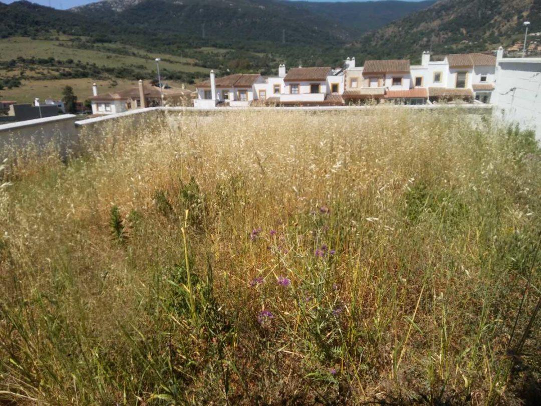 Assista -Vivienda en Algeciras Antes de obra 18